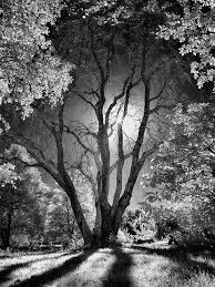 best 25 tree photography ideas on exle of