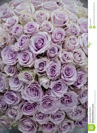 lavender roses lavender roses centerpiece flowers stock photo image 58742876