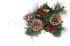 pine cones berries and greens on white stock photo