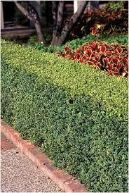 selecting shrubs for minnesota landscape umn extension