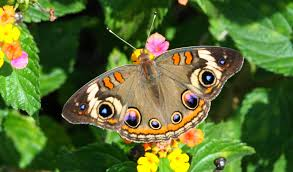 blok888 top 10 most beautiful butterflies in the