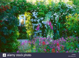 cottage garden rose arch trellis stock photos u0026 cottage garden