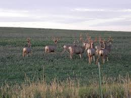 colorado semi guided elk hunts http coloradoelkhuntingoutfitters com u2013 the best hunts at the