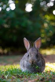 443 best rabbits images on pinterest bunny rabbits animals and