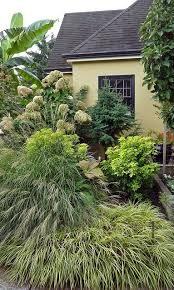1249 best ornamental grasses images on ornamental