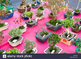 flower pot sale plants in pots on sale at columbia road flower market in east