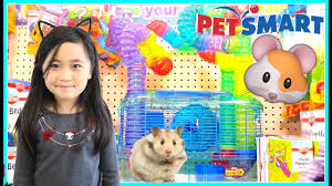 Petsmart Small Animal Cages First Pet Hamster At Petsmart Shopping For Hamster At Petsmart