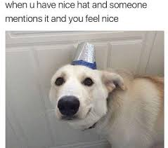 Hat Meme - irti funny picture 9473 tags nice hat meme dog mentions it