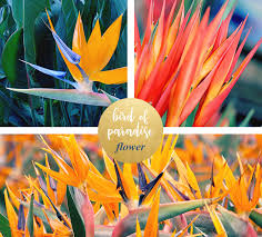 bird of paradise flower bird of paradise meaning and symbolism ftd