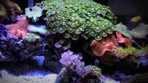 fluval edge marine light marine fluval edge led lighting mod 6 gallon reef aquarium youtube