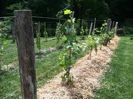 how to make your own grape trellis a whole lotta how to