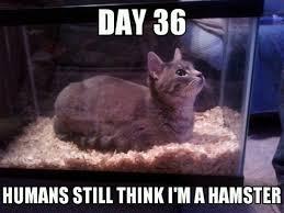 Scumbag Fat Girl Meme - thats one fat hamster meme guy
