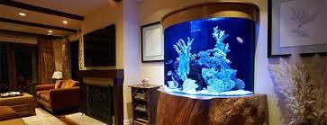 designer aquarium beautiful affordable marine aquarium for your home office