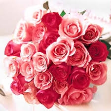 day flowers these roses are gorgeous i the various colours of all the