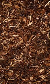 melcourt spruce ornamental bosbigal
