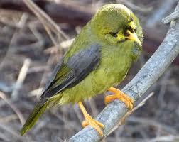birdlife in abel tasman national park abel tasman sea shuttles