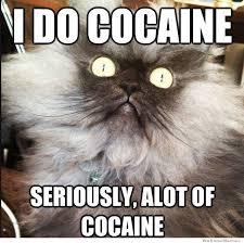 Cat Cocaine Meme - i do cocaine cat my kinda humor pinterest cat and humour