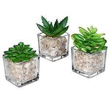 amazon com small glass cube artificial plant modern home decor