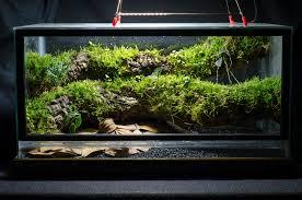 10 gal epiphyte branch vivarium dendroboard