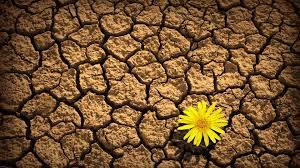 yellow daisy wallpapers flowers daisy flower yellow beauty nature beautiful desert