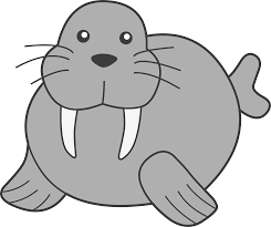 fresh idea walrus outline picture of face coloring pages