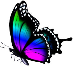 colorful butterfly png clip image gallery yopriceville
