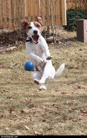 Hyper Dog Meme - hyper jumping dog happy birthday dog dog food reviews and wet dog