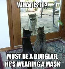 Meme Jokes Humor - image top 30 funny cat memes humor jokes jpg animal jam clans