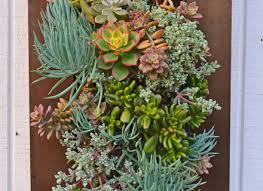 19 living wall art succulents cool diy green living wall projects