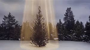How To Trim A Real Christmas Tree - safety hazards of christmas trees both real and fake protect