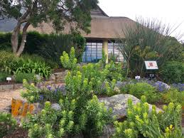 Kirstenbosch National Botanical Gardens by Kirstenbosch Botanical Garden Cape Town U2013 Janna Schreier Garden
