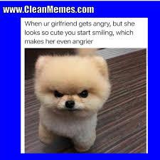 Cute Dog Memes - clean memes 10 12 2017 clean memes