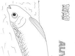 oceans bundle sarah277 teaching resources tes