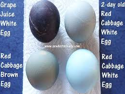 how to dye easter eggs naturally sew historically