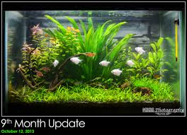 10 gallon planted tank led lighting migs 20 gallon low medium tech planted tank monthly update