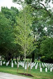 Arlington Cemetery Map Vietnam Helicopter Pilots Association Memorial Tree