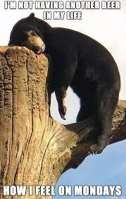 Hangover Meme - hangover bear meme on imgur