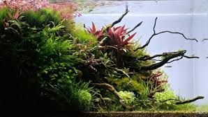 Aquascape Malaysia Simon U0027s Aquascape Blog