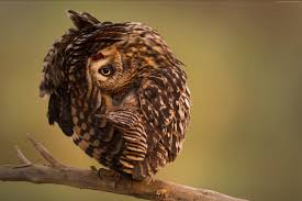 wallpaper national geographic 4k hd wallpaper owl funny os 149