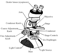 Parts Of A Compound Light Microscope Microscopes Microbiology