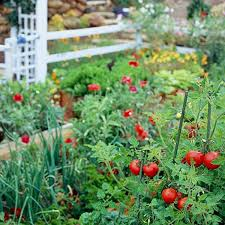 Home Vegetable Garden Ideas To Plan A Vegetable Garden