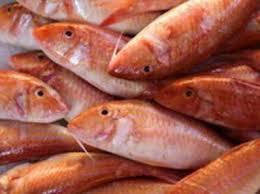 cuisine du poisson les poissons les plus courants en cuisine