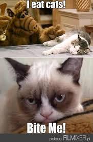 Alf Meme - alf vs grumpy cat filmixer the best of pinterest grumpy