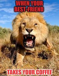 Lion Meme - lion memes imgflip