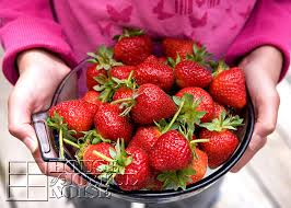 Strawberry Garden Beds Lessons Learned With Growing Strawberries