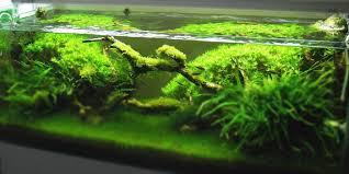 Aquascape Top 5 Best Aquarium Plants For Aquascaping Aquatic Mag