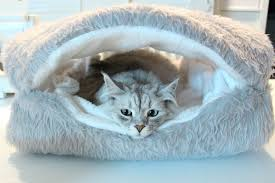 Clamshell Dog Bed by Siberian Status Update Clamshell Bed Youtube