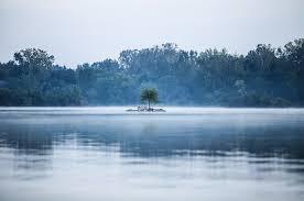 free photo solitude fog lake lonely tree free image on