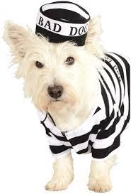 classic dog costumes costume craze