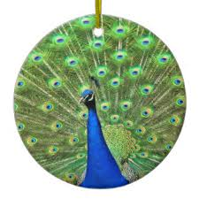 peacock ornaments keepsake ornaments zazzle